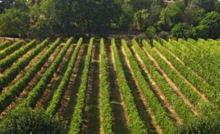 Il vino del Gruppo Cevico cresce nel 2011