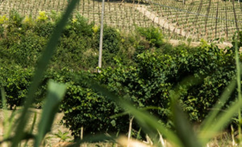 Santa Margherita investe nel Prosecco Docg