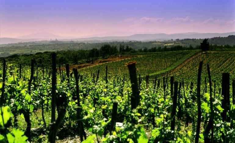 Italia di nuovo primo produttore mondiale di vino