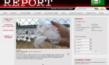 'Piume maltrattate', è scontro tra Report e Moncler