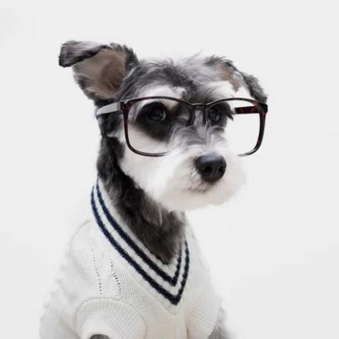 Uno dei cani-modello di Mr Porter.