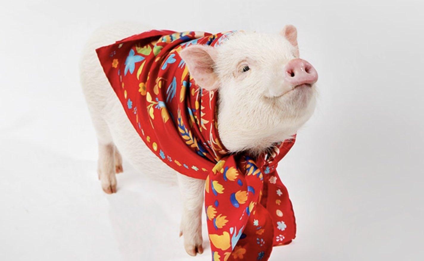 Oroscopo Cinese Maiale 2019 capodanno cinese, scoppia la moda del maiale - pambianconews